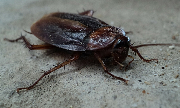 Keep Pests Out of Your HVAC System
